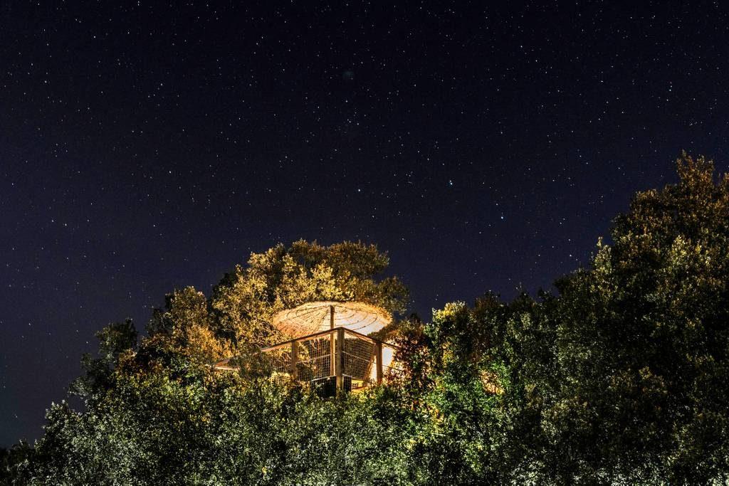 Overnachten in een boomhut